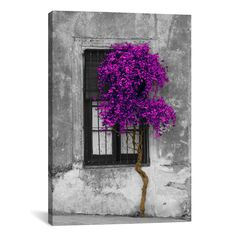 Tree in Front of Window Purple Pop Color Pop by Panoramic Images – Hearts Attic
