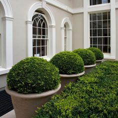 Pot ideas with topiaries