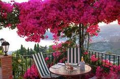 Image result for bougainvillea wall