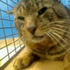 Brooklyn NY.  Handsome.  Male.  8 years.  Dies in a.m.  See Pets on Death Row- Urgent Death on fb.***RESCUED***