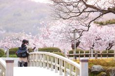 A girl is better than cherry blossoms... by Kosuke Fujimura on 500px.