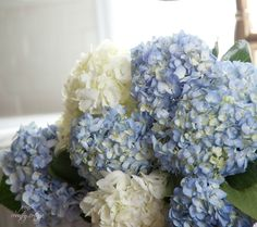Keep hydrangeas from wilting by cutting stem at an angle, then dip it in alum before putting in water. FRENCH COUNTRY COTTAGE: Saturday 5