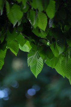 Cascata di foglie