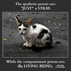 """""""Just"""" a Stray"""