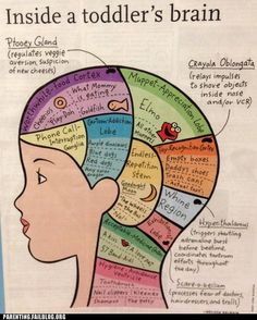 Toddler Brain