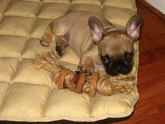"""More DIY Dog toy's, this has some WONDERFUL idea's.  Lot's of """"why didn't I think of that"""" stuff. :)"""