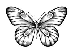 Illustration of beautiful black and white butterfly. Hand-drawn contour lines and strokes. vector art, clipart and stock vectors. Butterfly Clip Art, Butterfly Drawing, Butterfly Painting, Pencil Drawings Of Girls, Love Drawings, Tattoo Drawings, Butterfly Black And White, Black And White Abstract, Contour Line