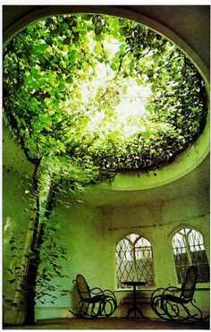 A tree growing inside the house...bringing nature inside the home :)