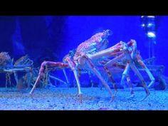 El gigantesco cangrejo araña japonés - http://www.entuespacio.com/offtopic/el-gigantesco-cangrejo-arana-japones/