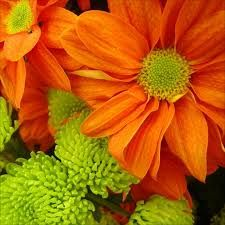 Image result for up close flower centres