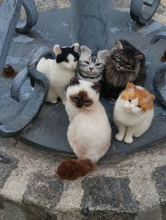 Cat gathering- they look so amazingly real!