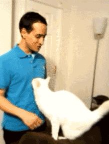 Distractify   11 Lovable Cats Who Can't Get Enough Of Your Hugs
