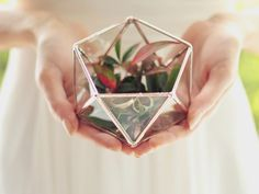 Hey, I found this really awesome Etsy listing at https://www.etsy.com/listing/228855595/new-mini-geometric-terrarium-icosahedron