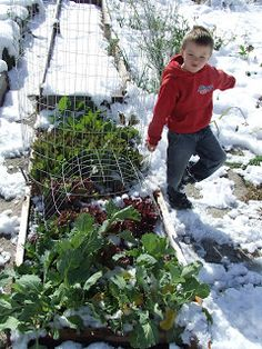 Backyard Renaissance with Caleb Warnock: Best Seeds For Planting In Jan/Feb in Any Climate