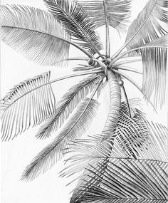 palm tree coloring sheets | Palm tree coloring pages - Coloring Pages & Pictures - IMAGIXS