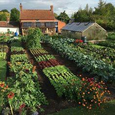 Vegetable Garden For Beginners, Vegetable Garden Design, Gardening For Beginners, Gardening Tips, Vegetables Garden, Vegetable Gardening, Veg Garden, Easy Garden, Greenhouse Gardening