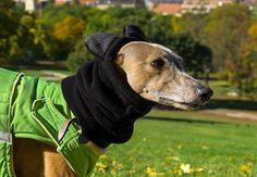 Winter dog snood with ears - fleece dog snood - dog hat / hood - MADE TO ORDER Dog Snood, Dog Winter Coat, Whippets, Greyhounds, Dog Coats, Dog Breeds, Your Dog, Ears, Washing Machine
