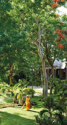 Royal Palm Hotel garden. Mauritius Island