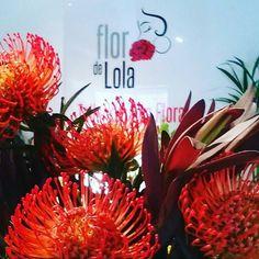 @flordelola2014  Estas #exoticas #flores acaban de #llegar a la #flori para nuestros #queridospadres Sí a #ellos también les gustan las #flores.  #Felizdiadelpadre para el #nuestro que #es #elmejordelmundo !!! #floristeriasmadrid#stylehouse#casabonitas #beautifulhouses #condeduque #condeduquegente #flordelola by condeduquegente