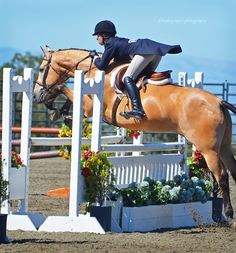 horse jumping horse jumping - Art Of Equitation English Horseback Riding, English Riding, Show Jumping Horses, Show Horses, Cross Country Jumps, Hunter Jumper, Horse Pictures, Horse Photography, Horse Love