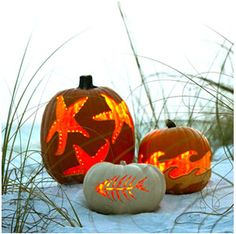 Pumpkins   Come visit us in the Bay Area- St. Pete Beach, Treasure Island, Madeira Beach, Gulfport, Indian Rocks Beach, Sunset Beach, Pass-a-Grille, and Tierra Verde.   Find out what is happening http://paradisenewsfl.com