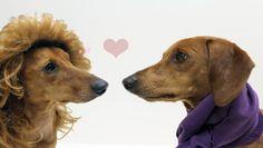 Doxie Love! Happy Valentine's Day!