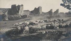 Kara surları önünde koyunlar (1920'li yıllar) #istanbul