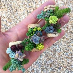 THREE (3) TO AN ORDER! These adorable micro gardens, made using repurposed wine corks, baby succulents, and live moss, make for the perfect hostess gift, wedding favor, party favor, shower favor, or holiday gift. Enjoy them as part of a larger table scape, on a window sill, or on a shaded porch.