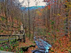 Appalachian Trail Section 00 GA, downstream from Amicolola Falls from Amicolola Falls State Park Top of Falls crossover bridge, 2011-1119 @ 092518A by Houckster, via Flickr