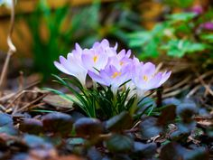 Spring Flowers Wallpaper | Spring Flowers 1280 x 960 Wallpaper