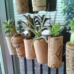 idea! glue suction thingies on the back of corks, then just use air plants...i wouldnt want to use anything else (muddy mess), suction cup to a window! ta daaa