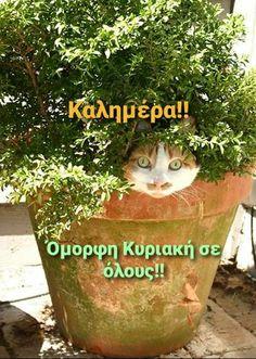 Nice Photos, Wonders Of The World, Good Morning, Planter Pots, Buen Dia, Cute Photos, Bonjour, Good Morning Wishes