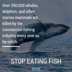 For the whales, dolphins, sharks, tuna and every other creature in our suffering sea, go vegan