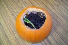Science - Open up the pumpkin, add a little soil and water, and watch the seeds (which are already inside the pumpkin) grow.