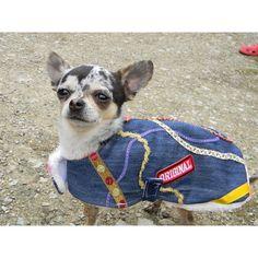 Chihuahua, Doggies, Chihuahua Dogs, Chihuahuas