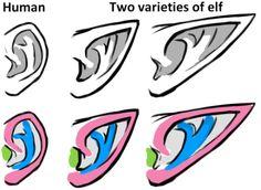 Drawing 4: Ears