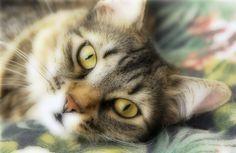 10 comportements étranges chez les chats démystifiés