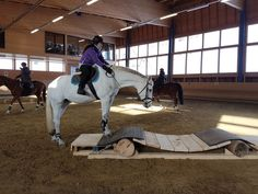 Horse Shelter, Horse Rescue, Ranch Riding, Trail Riding, Extreme Trail, Paddock Trail, Cross Country Jumps, Horse Exercises, Horse Facts