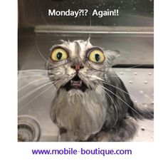 Mondays are awesome!  #daysoftheweek #humor #cats