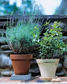 herbs..maybe besides the garden this year, grow them in the windowbox and classroom windowsill  wholeliving.com