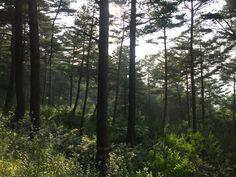 [봉화]문수산숲길