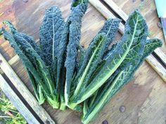 Le kale, nouvel allié détox