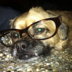 Kingsley in my glasses