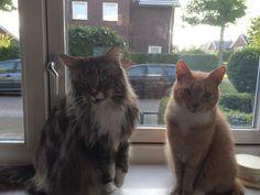 Best buddies Savo en Tommy!