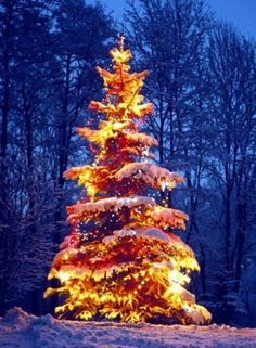 outdoor christmas tree   ... of lights against blue and snow. Beautiful outdoor Christmas tree