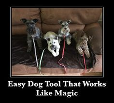 My Schnauzer Addiction: Easy Dog Tool That Works Like Magic