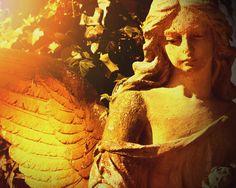 Reiki and Angel Therapy Spiritual Medium, Animal Reiki, Learn Reiki, I Am Sad, Reiki Energy, Psychic Abilities, Psychic Readings, Cool Websites, Intuition