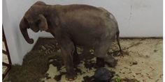 "Help to get Tania out of the Targu Mures Zoo - Tania lives in misery in a concrete ""prison"" at the zoo.  A spot needs to be found for her in a sanctuary for elephants."