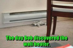 Dump A Day Funny Animal Pictures Of The Day - 30 Pics
