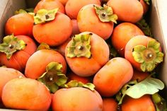 20 Persimmon Recipes to Try Out This Winter | Brit + Co